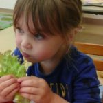 Eating the lettuce we grew ourselves!